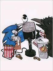 BirdTalk Radio Show
